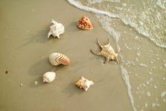 美丽的自然贝壳的六种类型在海滩驱散了 库存图片