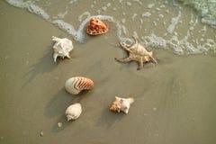 美丽的自然贝壳的许多类型在海滩驱散了 库存照片