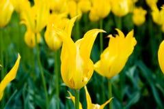 美丽的花。 免版税库存照片