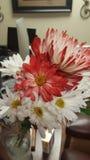 美丽的花为天 库存照片