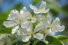 美丽的花做您的眼睛明亮的颜色 免版税库存照片