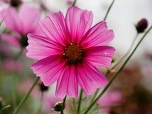 美丽的花充分的草甸 免版税库存照片