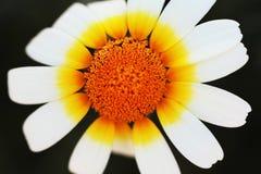美丽的花关闭  免版税库存图片