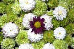 美丽的花卉背景花 免版税库存图片