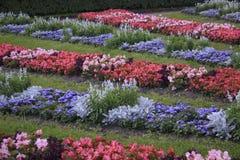 美丽的花卉花圃 免版税库存照片
