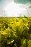 美丽的花叶子,当太阳上升 免版税库存图片