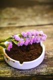 美丽的花和咖啡渣在葡萄酒木背景 库存图片