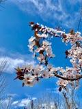 美丽的花和天空蔚蓝 免版税库存图片