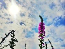 美丽的花和天空 免版税库存照片