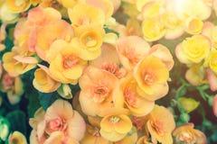 美丽的花和绿色叶子背景在庭院里在晴朗的夏天或春日 免版税库存照片