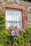美丽的花和老窗口 免版税库存照片