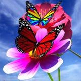 美丽的花和蝴蝶 库存照片