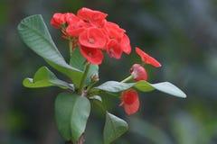 美丽的花喜欢美好的生活 库存照片