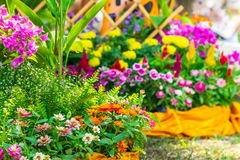 美丽的花园在夏天 库存图片