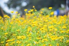 美丽的花园 花和叶子黄色 免版税图库摄影
