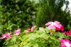 美丽的花园 免版税库存图片