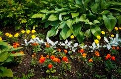 美丽的花圃 免版税图库摄影