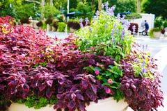 美丽的花在一好日子在春天或夏天 免版税库存图片