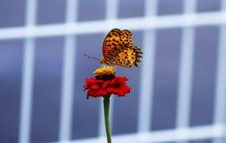 美丽的花在与一只可爱的蝴蝶的夏天 免版税图库摄影