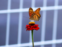 美丽的花在与一只可爱的蝴蝶的夏天 免版税库存图片