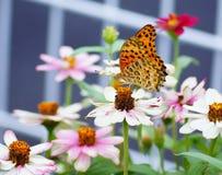 美丽的花在与一只可爱的蝴蝶的夏天 图库摄影