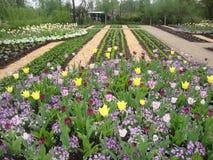 美丽的花在公园 免版税图库摄影