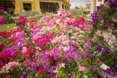 美丽的花在后院 免版税图库摄影