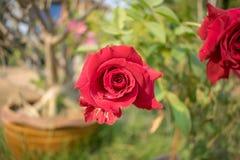 美丽的花在后院 免版税库存图片
