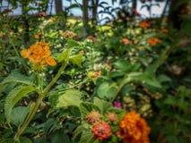 美丽的花在地中海附近的热带庭院里 库存图片