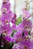 美丽的花在庭院里 兰花 库存照片