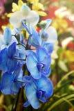 美丽的花在庭院里 兰花 库存图片