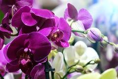 美丽的花在庭院里 兰花 免版税库存图片