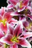 美丽的花在庭院里 免版税库存照片