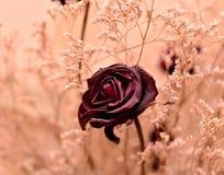 美丽的花在庭院里 库存图片