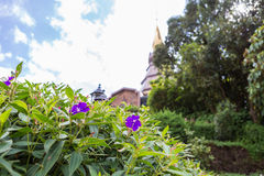 美丽的花在庭院里 库存照片