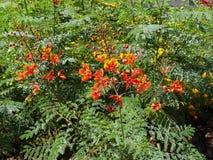 美丽的花在拉斯维加斯 库存图片
