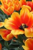 美丽的花在春天 免版税图库摄影