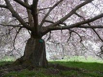 美丽的花在植物园里 免版税库存图片