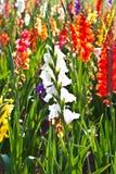 美丽的花在草甸 免版税库存图片
