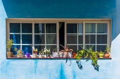 美丽的花在蓝色canarian墙壁上的开放接近的窗口里 库存照片