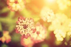 美丽的花在阳光下 自然葡萄酒样式 免版税库存图片