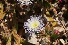 美丽的花在非洲国立公园 库存照片