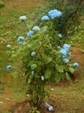 美丽的花在HIDMBA寺庙PIC中 库存图片