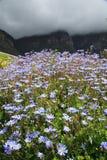美丽的花在Kirstenbosch全国植物园里 图库摄影