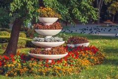 美丽的花床在公园 库存图片
