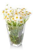 美丽的花延命菊花瓶 免版税库存照片