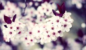 美丽的花春天星期日水 库存照片