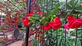 美丽的花曲拱和走道的关闭在庭院里 库存图片
