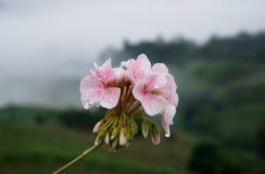 美丽的花有迷离背景 库存照片