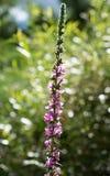 美丽的花本质上 免版税库存照片